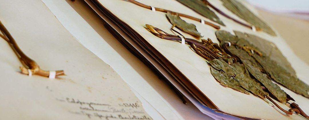 Advancing the Catalogue of the World's Natural History Collections