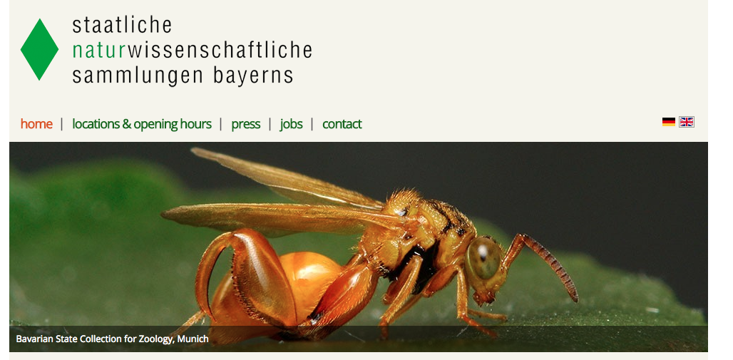 DiSSCo welcomes their 115th member: The Bavarian Natural History Collections